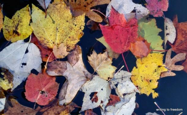 autumn, change