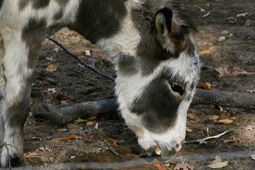 donkey-3825201__340